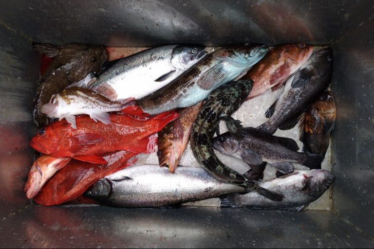 Variety of Fish inside a Steel Bin