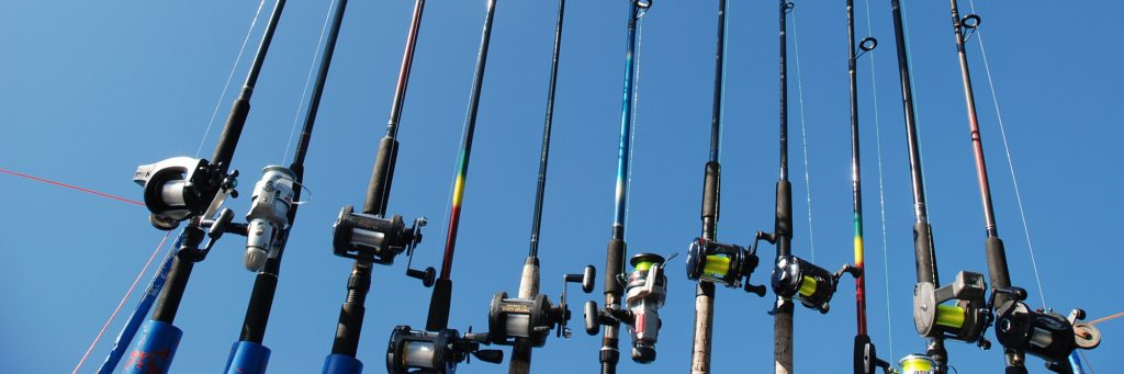 Collection of Fishing Rods Featured Image