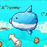 Survive! Mola Mola