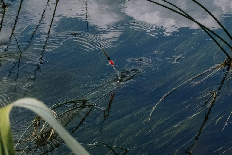 Lure on a Weedy Part of Water